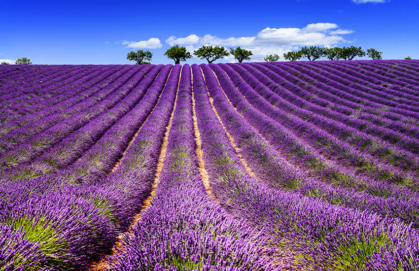 Visit Provence by motorhome