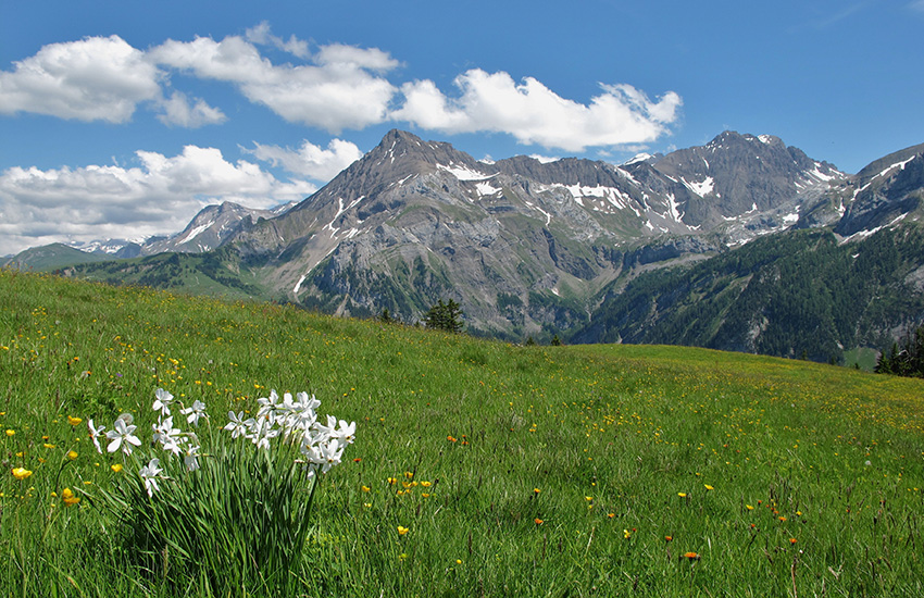 The spectacular green hills and snow capped mountains of Bernese Oberland are a must see on your motorhome holiday around Switzerland