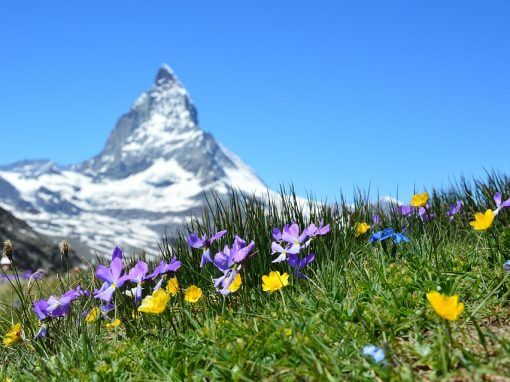 Swiss Adventure