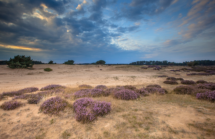 Discover De Hoge Veluwe with the Motorhome Travel Agency